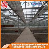 野菜か庭またはきのこまたはいちごの農業のガラス温室