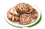 Сельскохозяйственный продукт белого цветка высушенный грибом