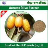 Herbst-olivgrüner (Elaeagnus umbellata) Auszug