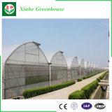 Casa verde hidropónica de vidro de película plástica da fábrica de China para o tomate