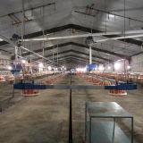 Strumentazione dell'azienda agricola del selezionatore del pollame per produzione del selezionatore della griglia