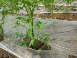 Concime biologico di Unigrow per la piantatura del pomodoro