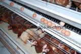 Cage agricole de poulet à rôtir de couche de batterie d'outil sur la vente