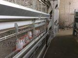 Strumentazione automatica piena del pollame della gabbia di strato della pollastra