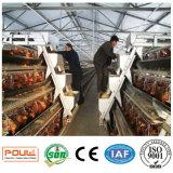 Capacità elevata della strumentazione del pollame una gabbia dell'azienda agricola di pollo di strato della batteria