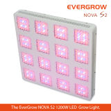 o diodo emissor de luz 2014 modular novo de Evergrow cresce claro para a estufa e a medicina