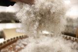 Teste Idfl 80% de pato cinza para baixo para jaquetas usando