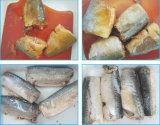 Peixes enlatados de venda quentes da cavala no molho do tomate