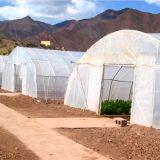 중국에서 증가하는 토마토를 위한 플레스틱 필름 갱도 온실