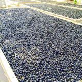 Frutos secos pretos orgânicos das bagas de Goji da nêspera