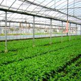 De Serres van de Film van de Spanwijdte van Mutil van de Landbouw van lage Kosten voor Verkoop