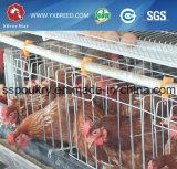 20, gabbia della strumentazione dell'azienda agricola dei 000 uccelli per lo Zambia (A-4L120)