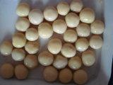In Büchsen konservierter Champignon-vollständiger Pilz im Zinn
