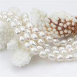 de largo collar de agua dulce natural de la perla de las mujeres verdaderas 60inches