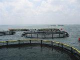 Anti-Onduler la cage de filet de pêche d'ouverture de mer profonde d'aquiculture