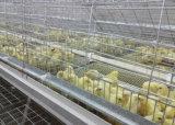 клетка цыпленка птицефермы 3-4tier малая (оборудование цыплятины)