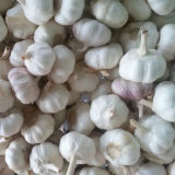Di qualità standard esportatore di aglio bianco fresco