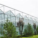 Venlo 온실/Venlo 유형 유리제 온실/유리제 온실