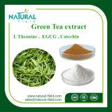 Polvere del polifenolo 50%-98% dell'estratto del tè verde