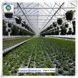 Comercial invernadero hidropónico hoja de la PC de la uva