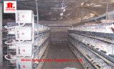 Matériel automatique de ferme de poulet de couche avec la conformité de GV