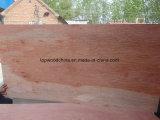 madera contrachapada comercial de 2mm-25m m Bintangor BB/CC para la decoración o los muebles