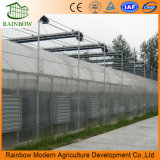 Basso costo galvanizzato alta qualità della multi della portata del tubo serra della pellicola per coltivare