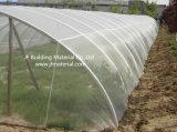 Réseau agricole transparent d'insecte de HDPE anti pour l'Anti-Oiseau et l'Anti-Insecte de fruit