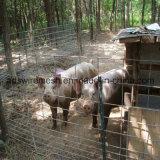 Clôture galvanisée Chaud-Plongée de panneau de bétail