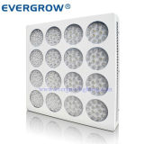 Distribution를 위한 친절한 LED Grow Light