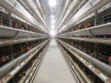 8 صفاح من 256 عصافير [ه] إطار يشبع آليّة دواجن تجهيز طبقة قفص نظامة