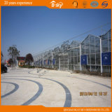 PC Sheet Greenhouse с Glass Surrounded для сада Picking