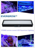 Simular Sunrise Sunset Moonlight It2080 240W Auto regulable LED luz del acuario