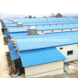 높은 Standard Design Steel Structure Chicken Shed와 Chicken Farm