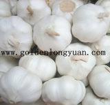 2016명의 새로운 작물 중국 사람 마늘