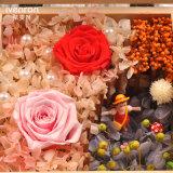 Ivenran 가져오기 살아있는 꽃 선물 상자