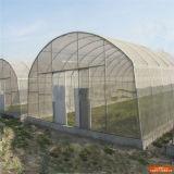 최신 판매 PE 갱도 정원 온실, 큰 Polytunnel 녹색 집