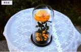 자연적인 실제적인 신선한 로즈 꽃 커버 유리 유구한 사랑