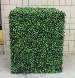 인공적인 회양목 벽