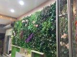 Заводы высокого качества искусственние и цветки зеленой стены Gu20170223150532