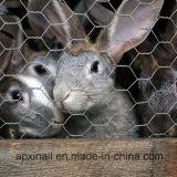 Cerca 50mmx50m m del conejo el 1X50m
