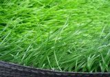 Wear-Resistance 20mm-50mm Artificial Lawn for Sale