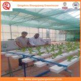 Hot-DIP galvanisierte grüne Glashäuser für Gemüse/Blumen
