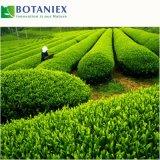Портивораковый выдержка L-Theanine зеленого чая для дополнения еды