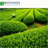 Extrato anticanceroso L-Theanine do chá verde para o suplemento ao alimento