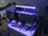 調節可能な珊瑚礁は57-70cmの魚飼育用の水槽のためのよりよいLEDのアクアリウムライトを育てる