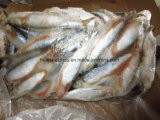 A melhor fábrica congelada da sardinha de China