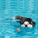 Hundespielwaren, Dogloveit Regenbogen EVA-Schaumgummi-Kugel für das Haustier-Hundekatze-Training, das Praxis-Spielzeug kauend spielt