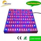 軍事大国45W Chloroba2 LEDは完全なスペクトルと軽く育つ