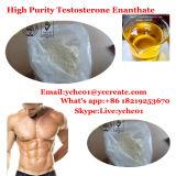 높은 순수성 테스토스테론 Enanthate 처리되지 않는 스테로이드 분말 시험 E